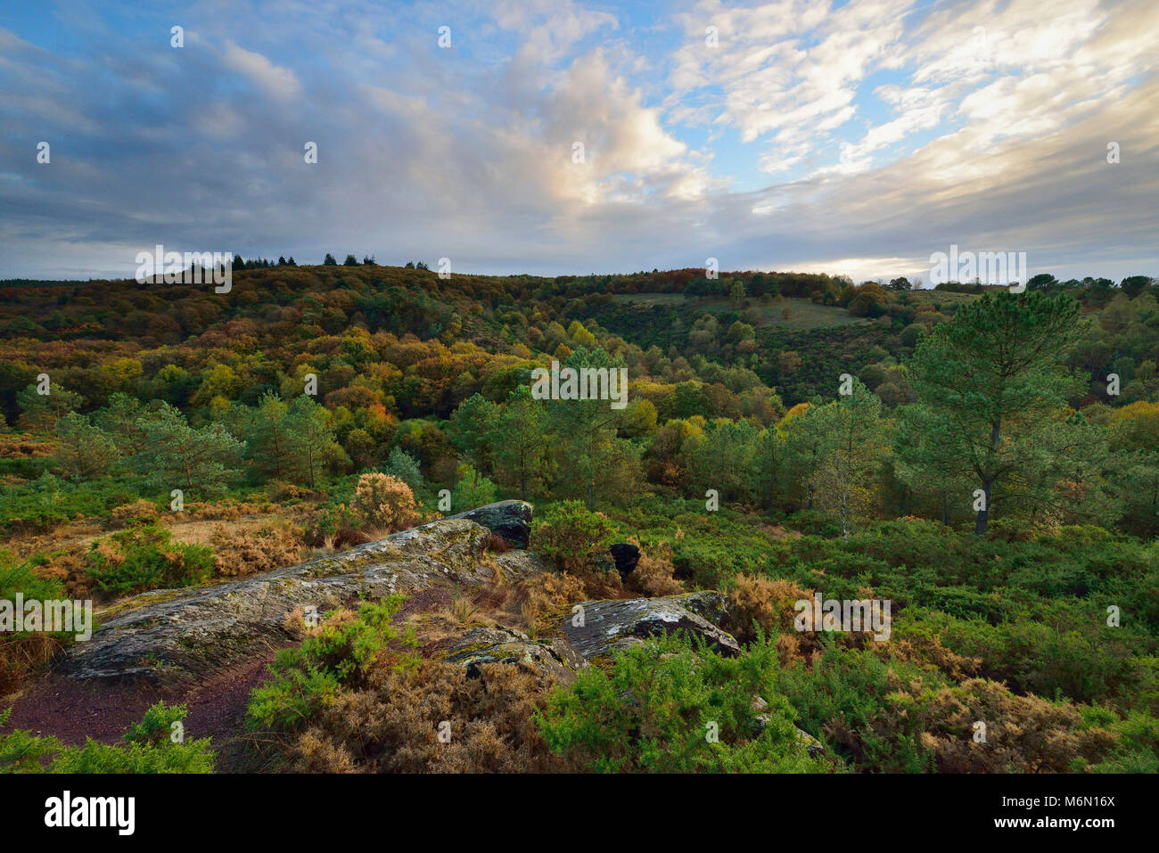 Forest of Paimpont, also known as the Forest of Broceliande: ÒLe Val sans Retour' in the town of Trehorenteuc - Stock Image