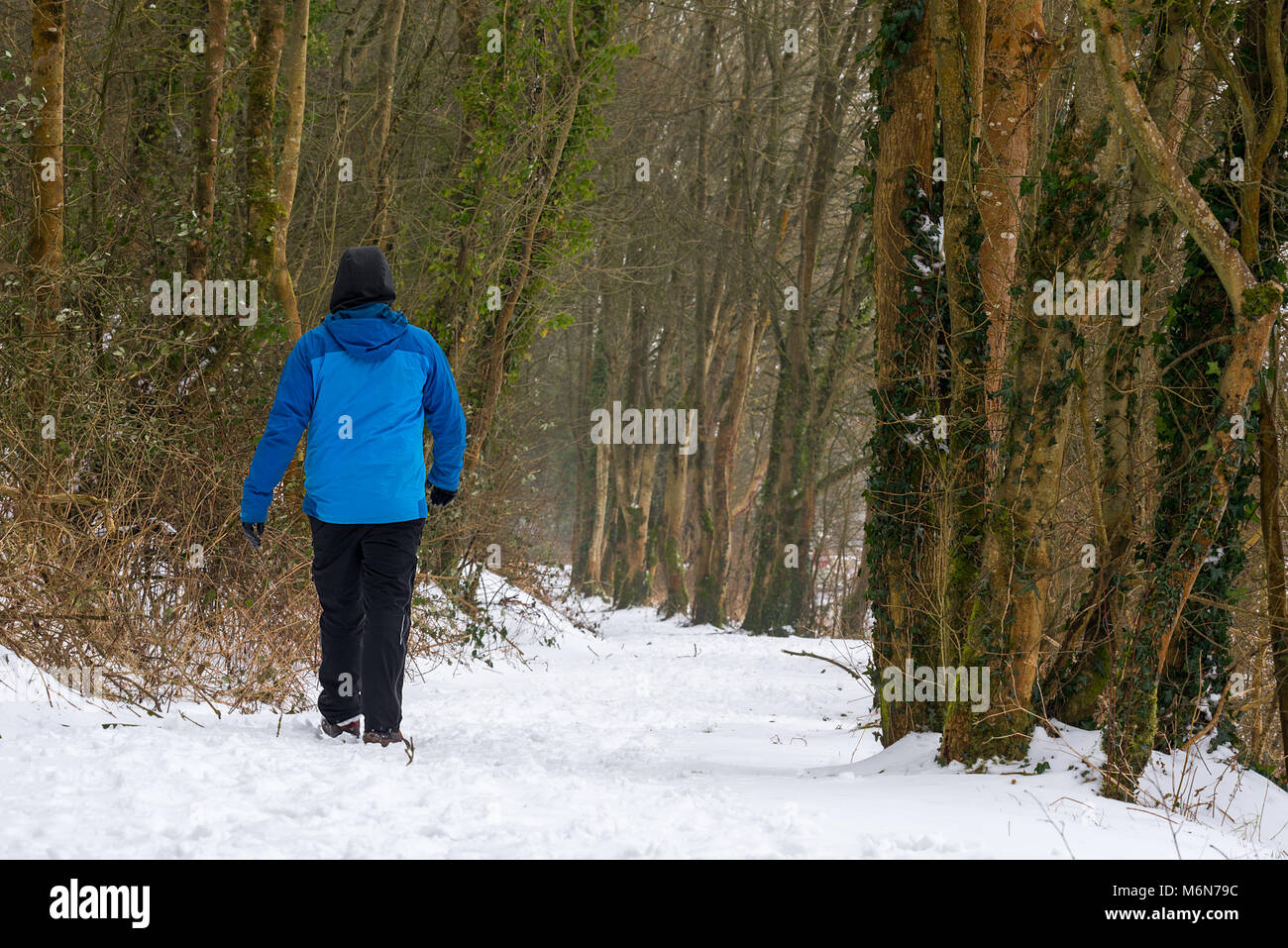 A lone man in warm winter clothes walks along a winding snow covered forest path. Stock Photo