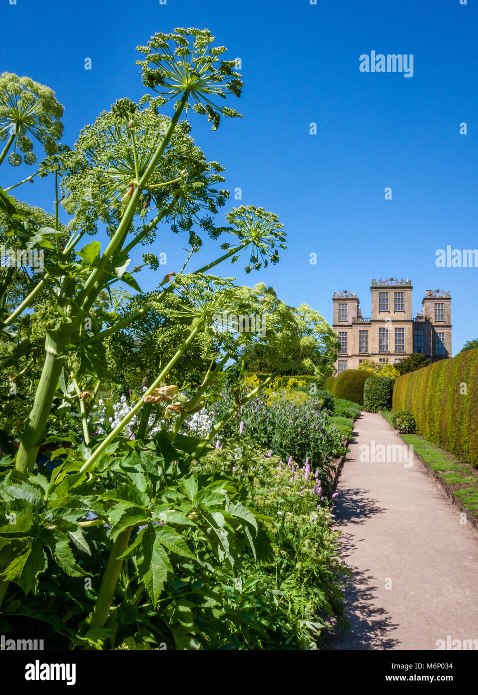 View of Hardwick Hall in Derbyshire from the kitchen garden with its exuberant planting of herbs vegetables and - Stock Image
