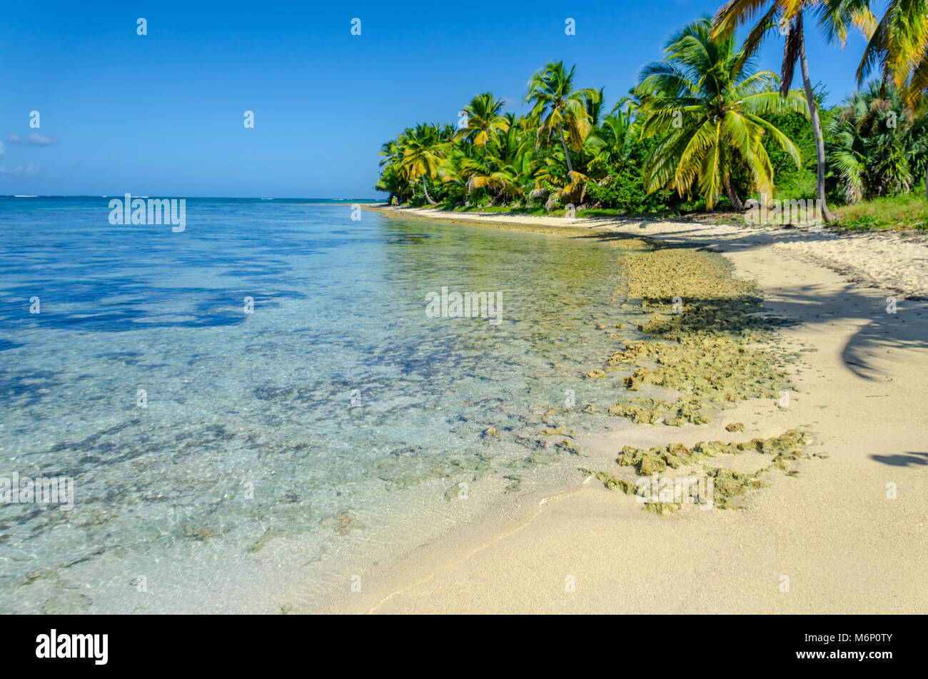 tropical beach with transparent ocean water, palm grove, stones, people walking along the shore and a blue sky with Stock Photo