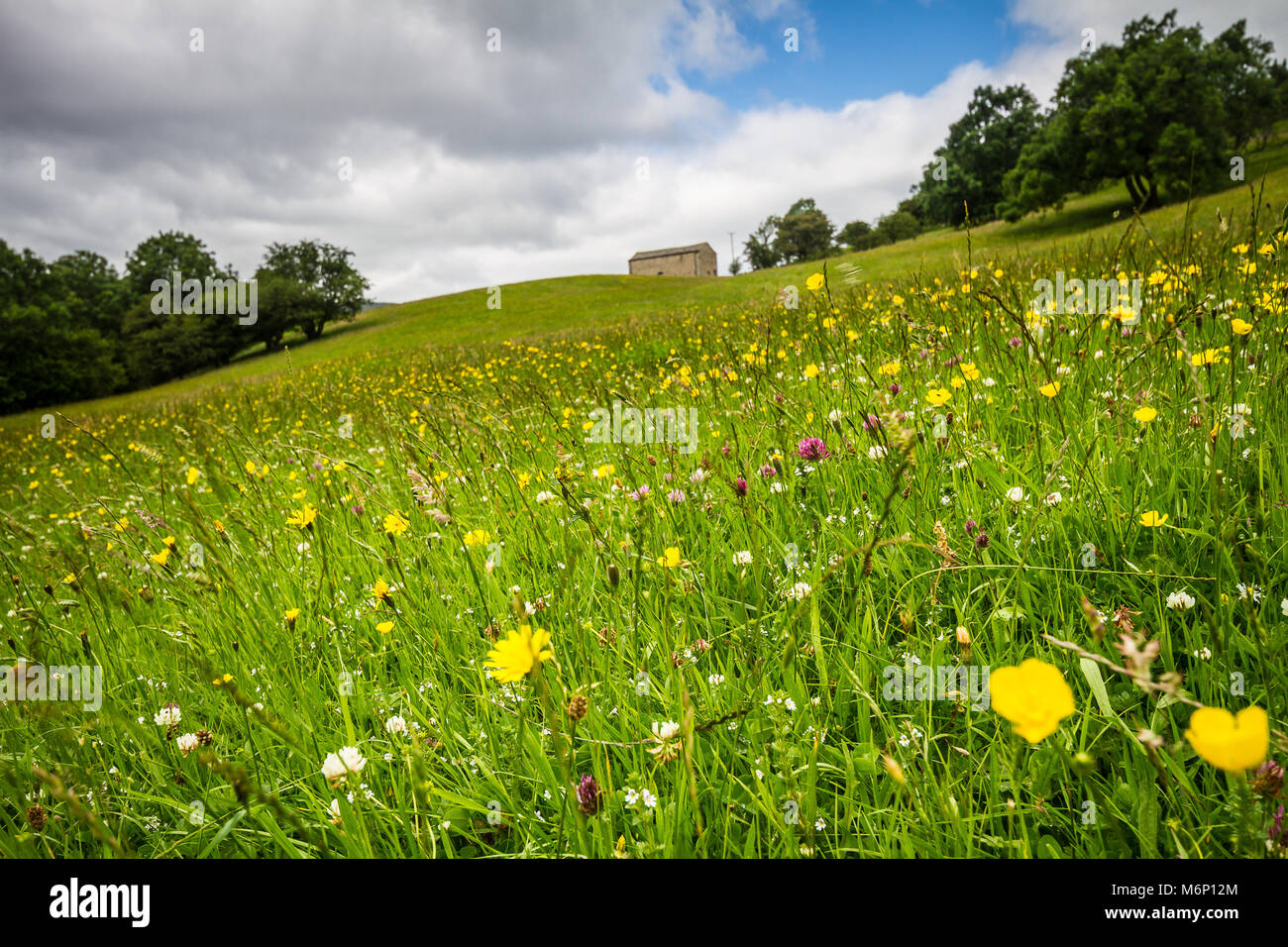 Summer meadow in full bloom in the midst of Wharfdale - Stock Image