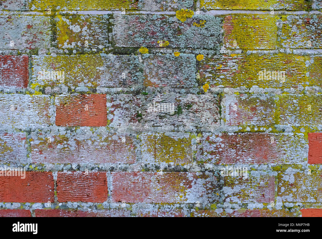 extremely damp exterior wall, norfolk, england - Stock Image