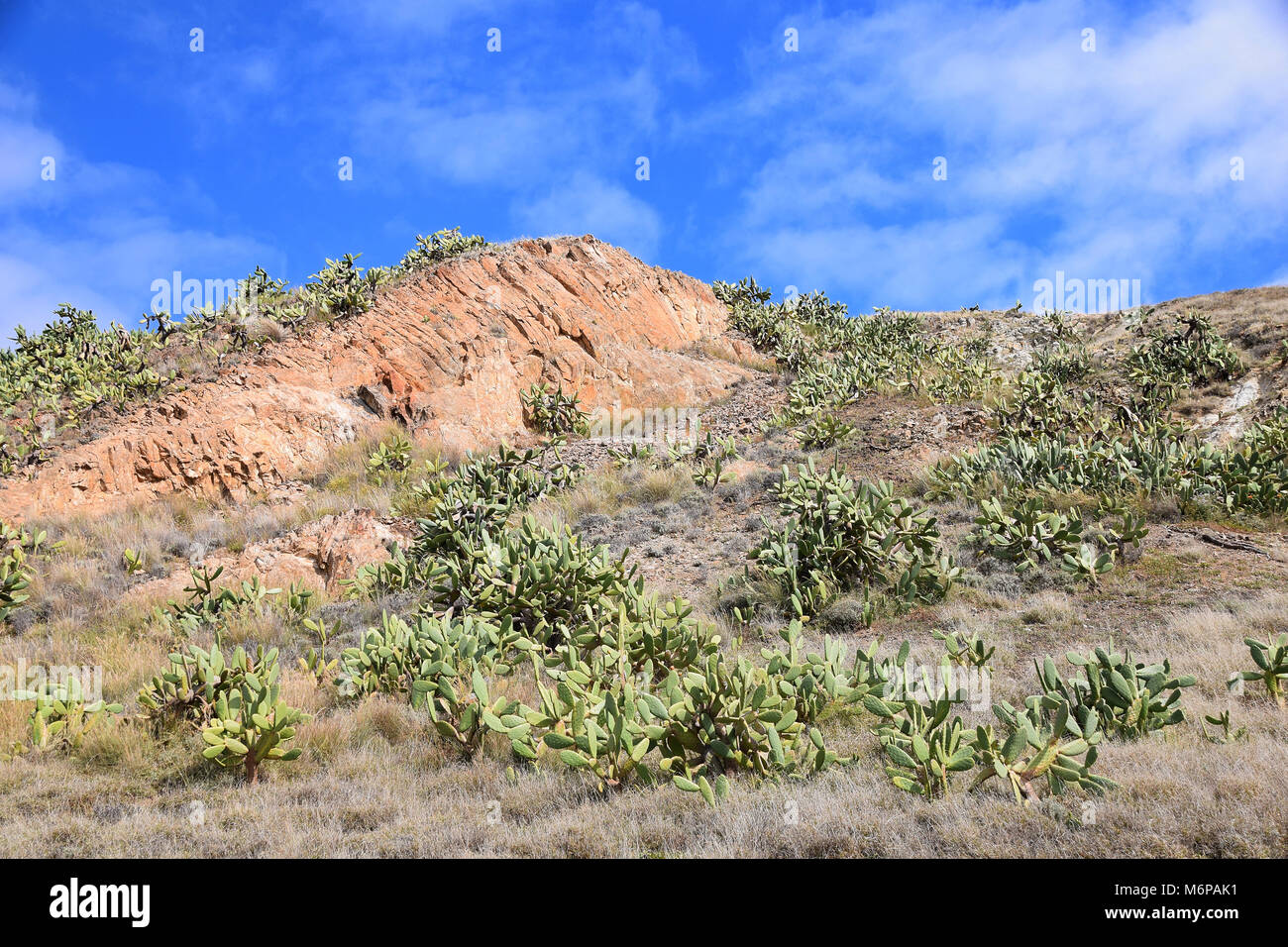 Geological landscape of rock and cactus to the east of Vila Baleira, Porto Santo, Portugal - Stock Image