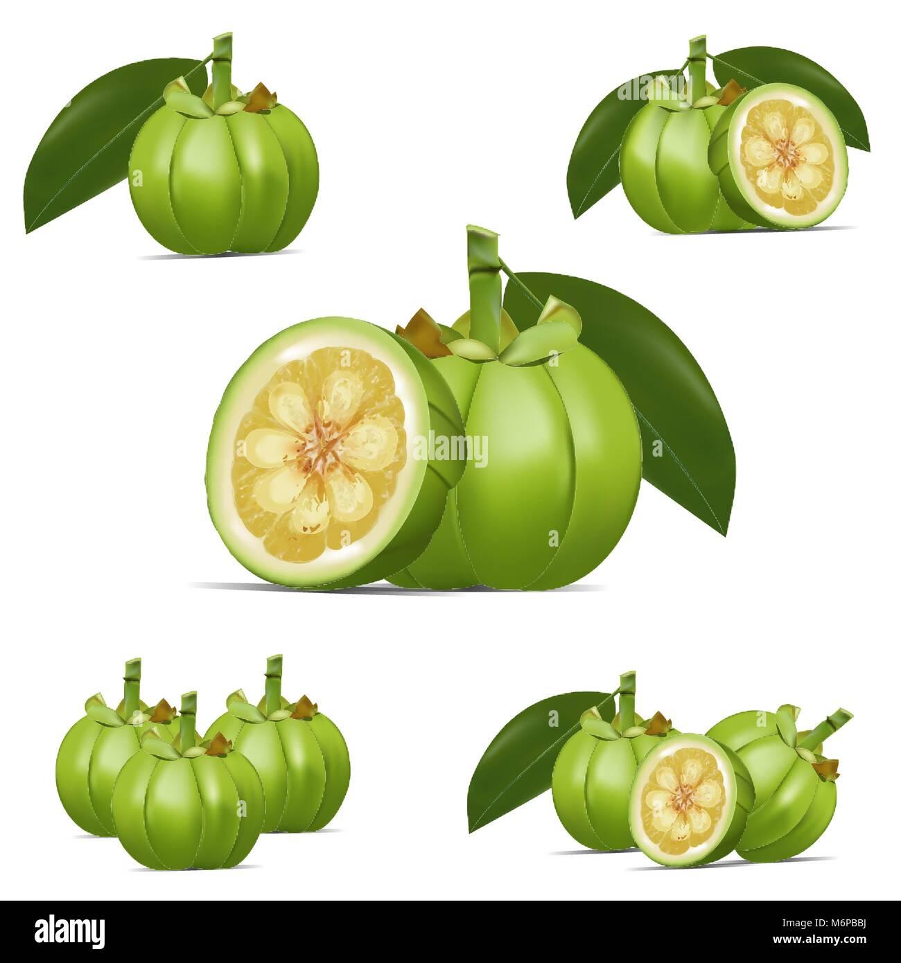 Garcinia Cambogia Fruit Vector Stock Vector Art Illustration