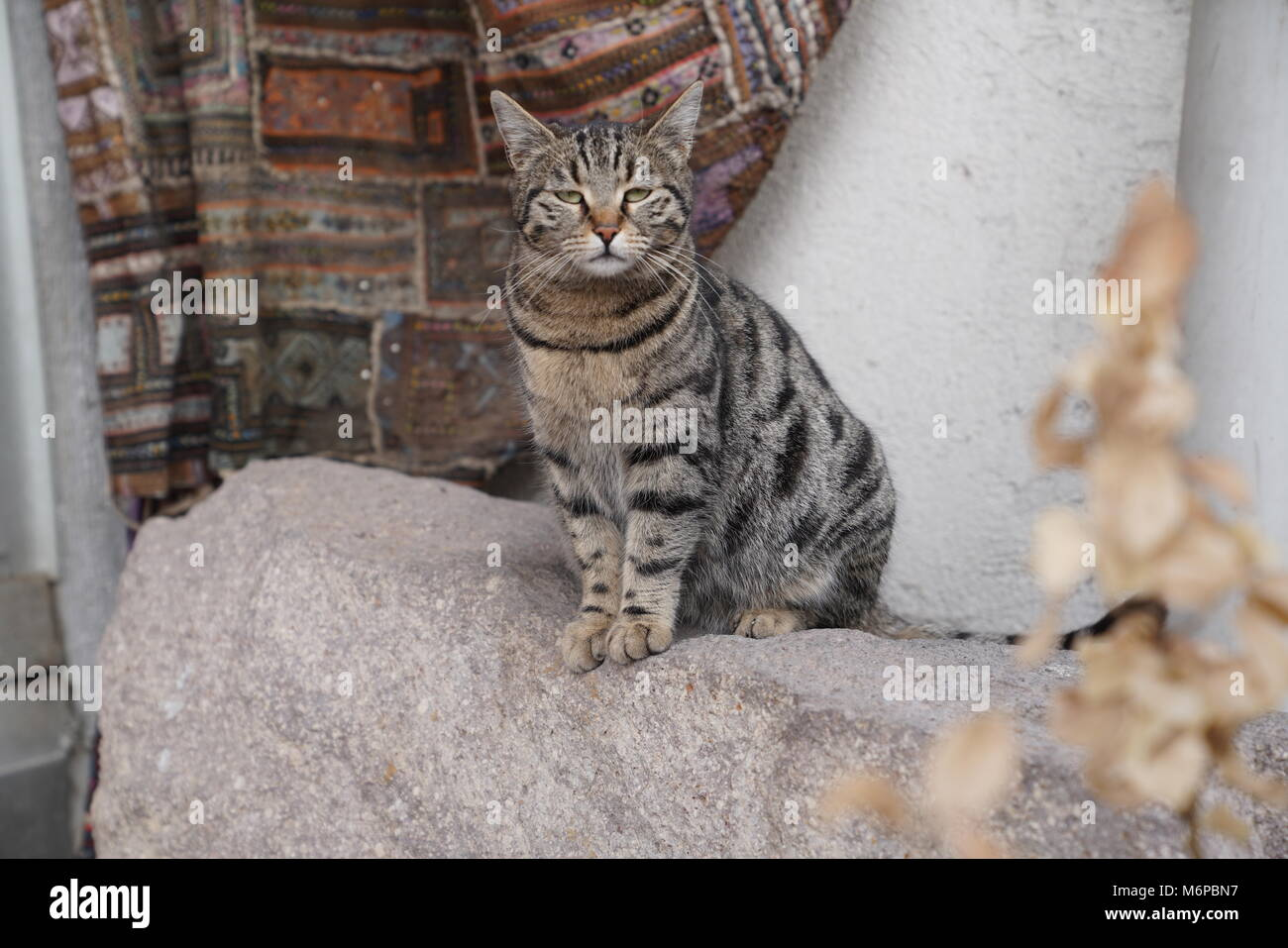 Lovely brown cat sitting on the rock and looking tiredly - Stock Image