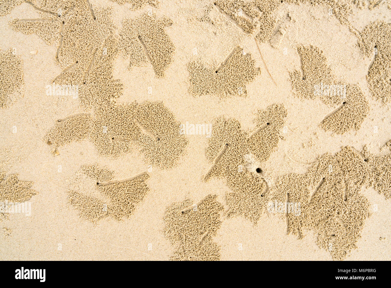 Tropical Island Beach Ambience Sound: Crab Hole Stock Photos & Crab Hole Stock Images