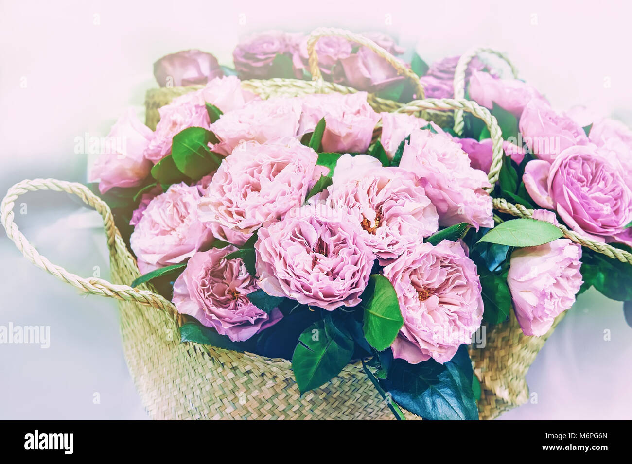 Roses peony modern elite varieties in a bouquet in wicker baskets as a gift. Close up. - Stock Image