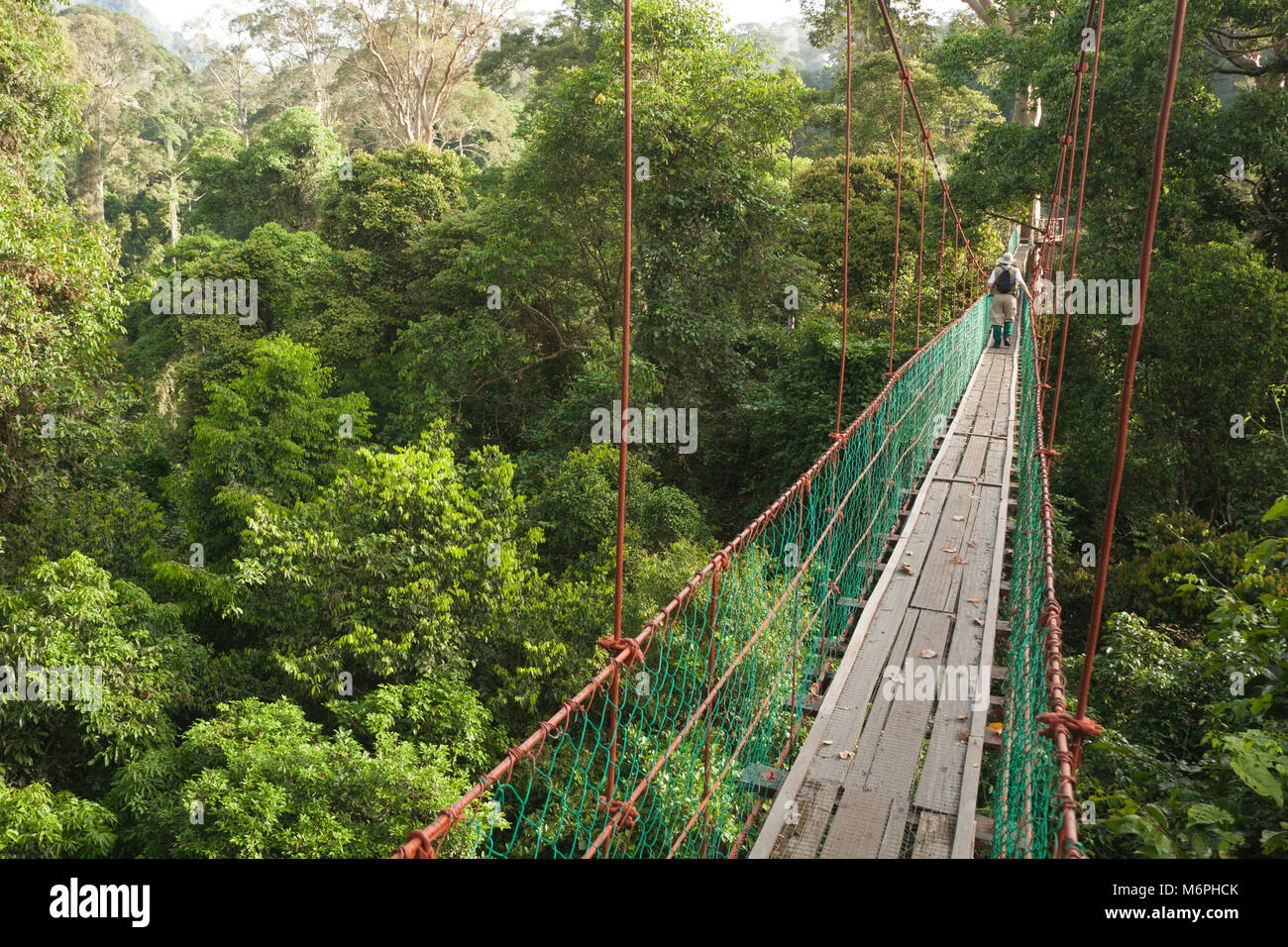 Ecotourist on canopy walkway in tropical lowland rainforest at the Borneo Rainforest Lodge - Stock Image