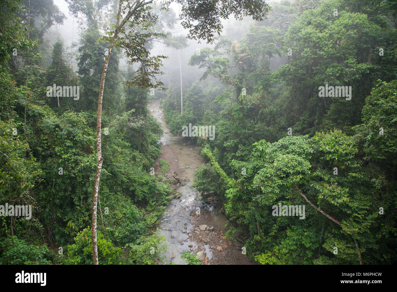 Tropical lowland dipterocarp rainforest in Danum Valley Conservation Area - Stock Image