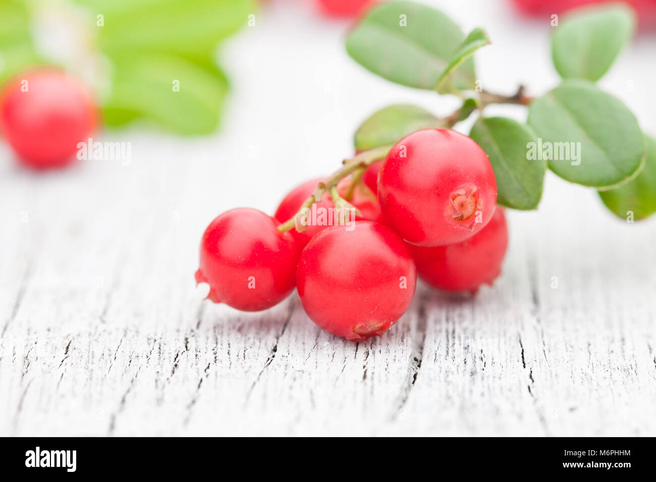 macro  image of fresh cowberry on the old white table - Stock Image