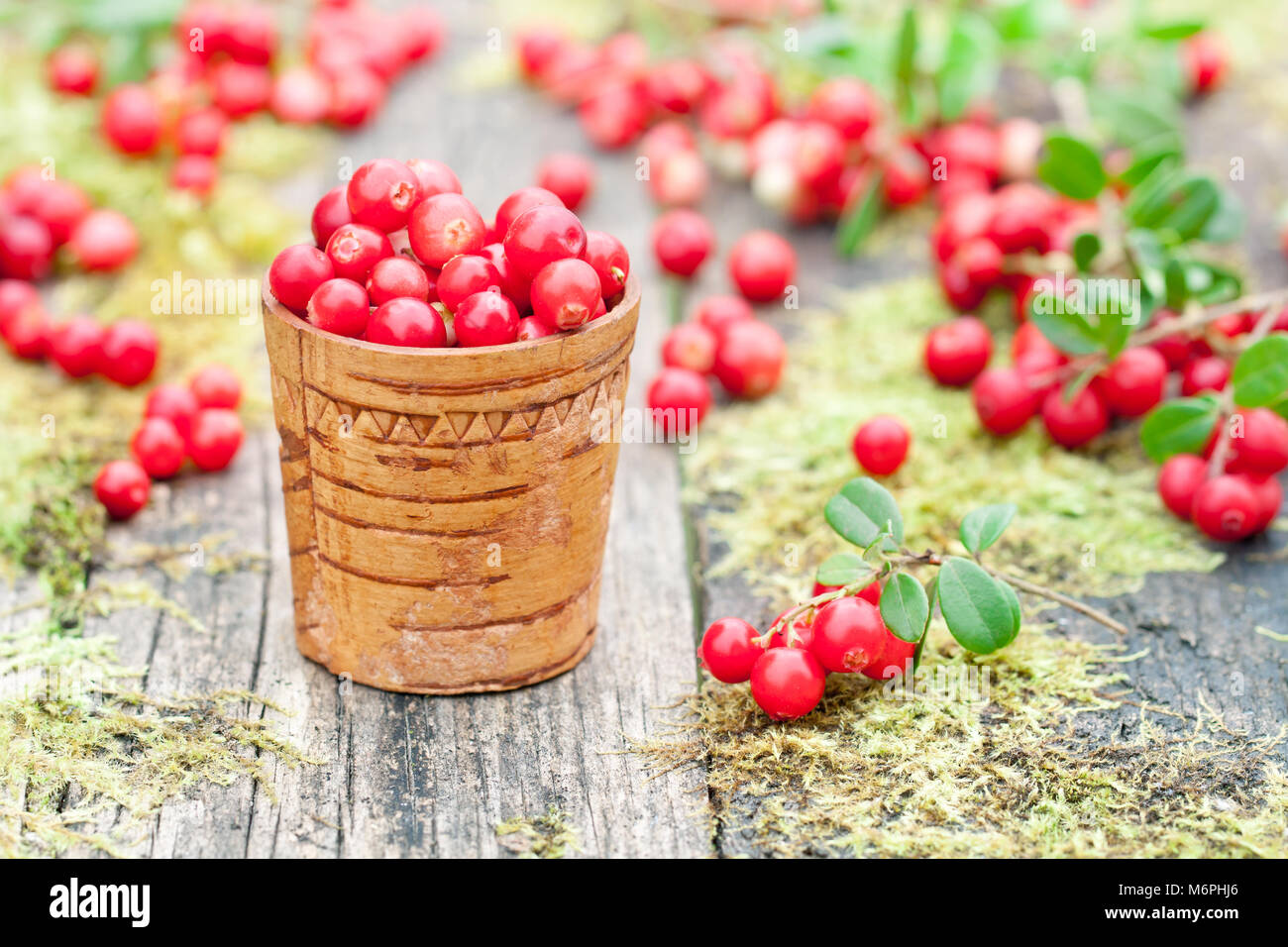 macro  image of fresh cowberry on the old moss table - Stock Image