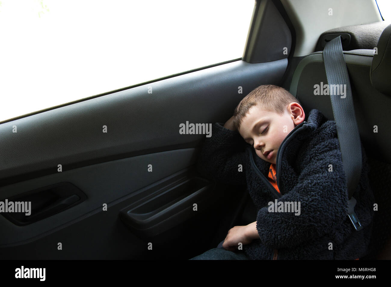 sleeping small boy sitting in car in back seat with seat belt Stock Photo