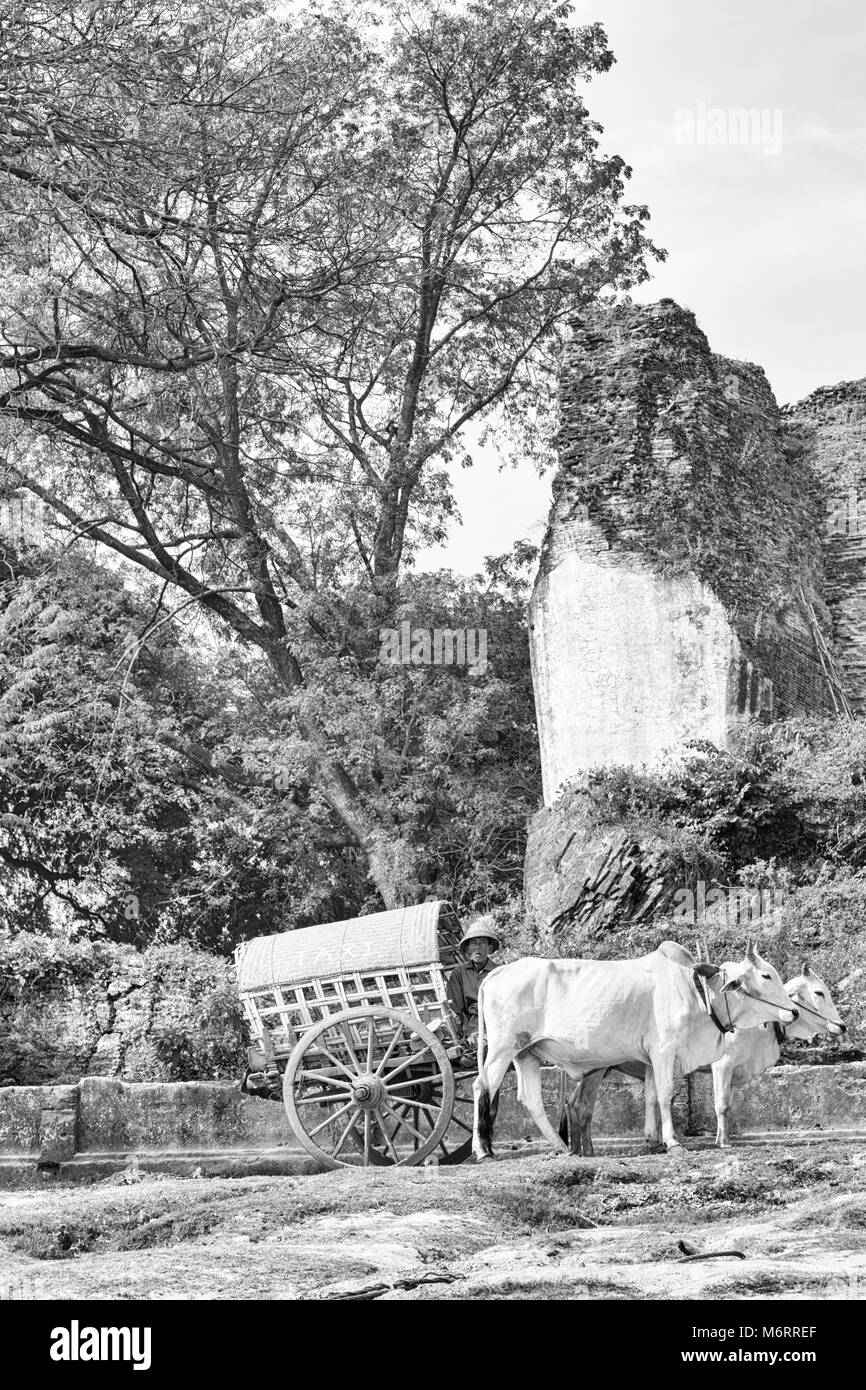 bullock oxen cart taxi waiting for passengers by the ferry landing at Mingun, Myanmar (Burma), Asia in February - Stock Image