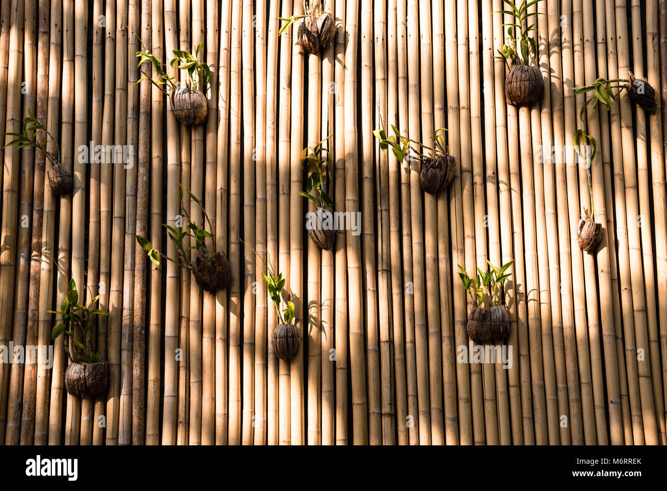 Bamboo Architecture Stock Photos & Bamboo Architecture Stock