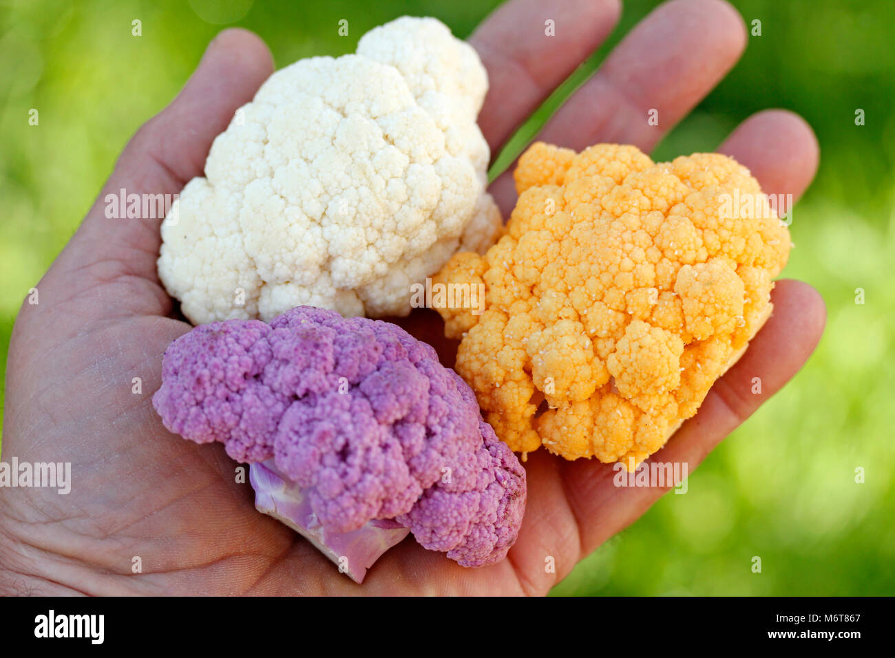 Varied cauliflowers. - Stock Image