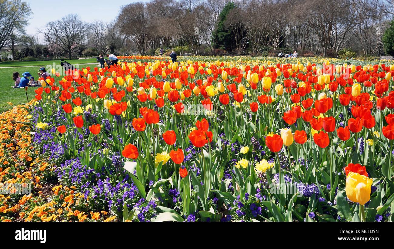 Dallas Texas March 6 2018 Dallas Arboretum And Botanical Garden