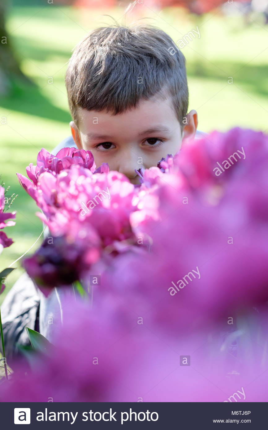 child playing hide and seek behind a flower bed - Stock Image