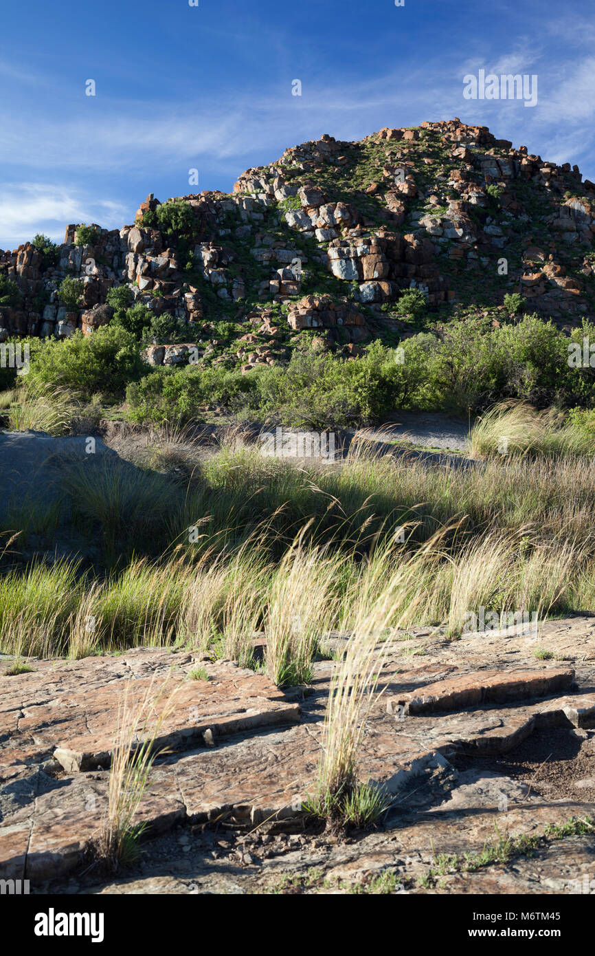 A dolerite koppie protruding through the predominantly sedimentary rock layers of the Karoo. - Stock Image
