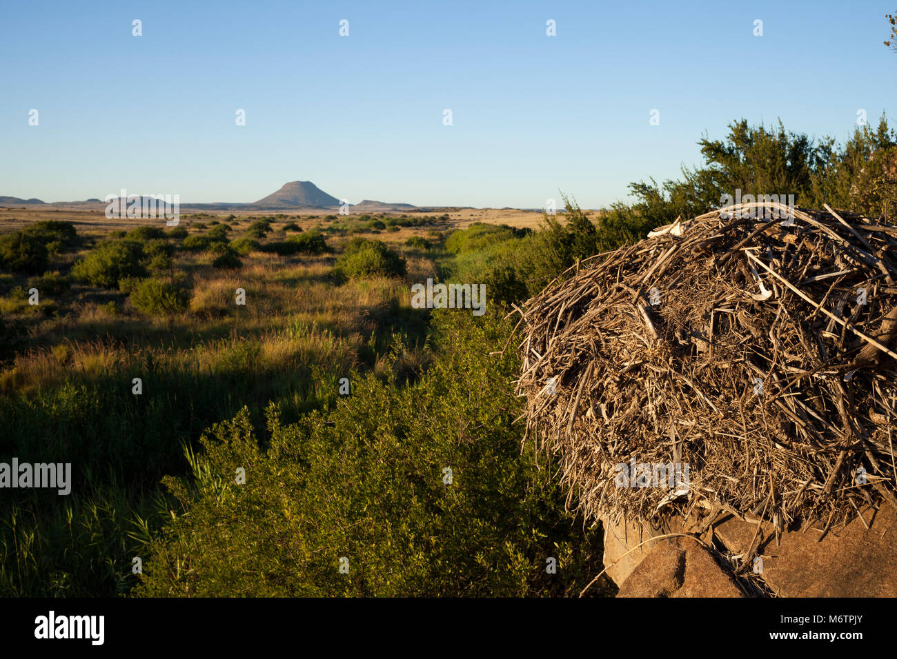 A hammerkop nest situated on a rock face overlooking the riparian habitat alongside a stream near Colesberg. - Stock Image