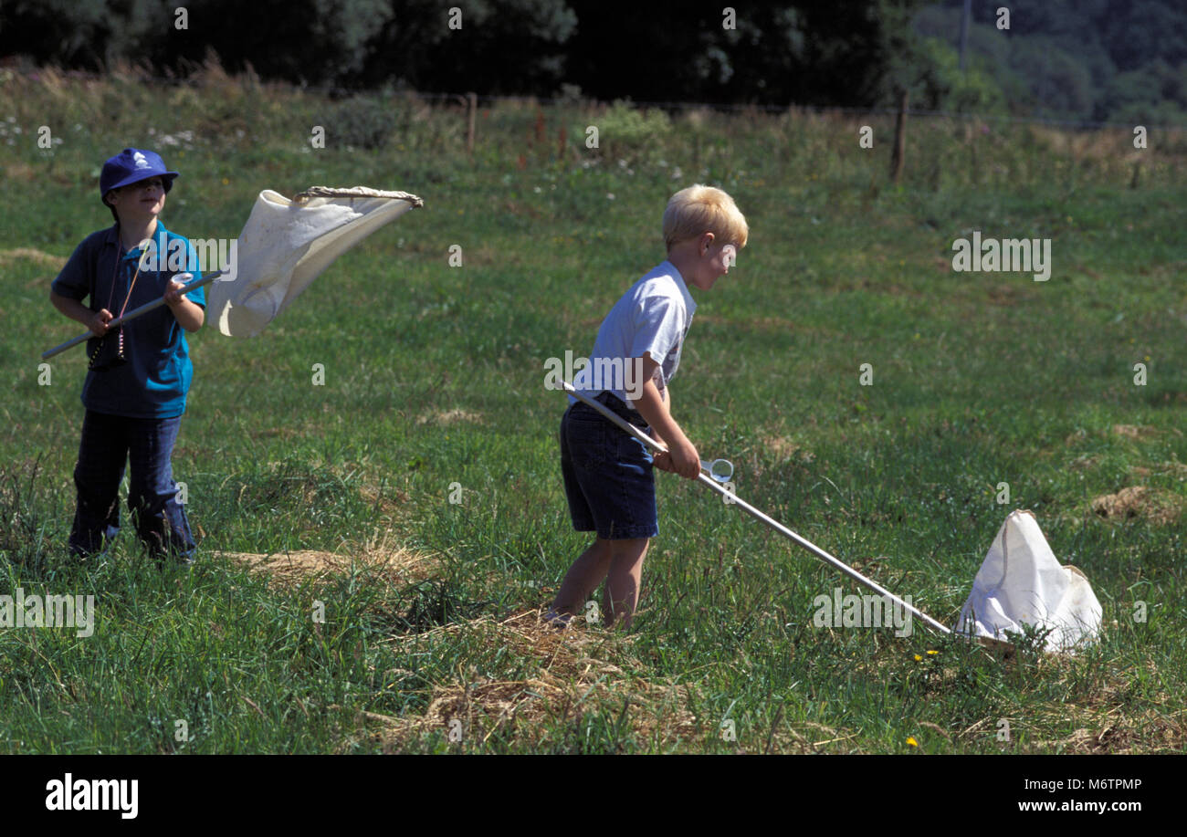 Two boys in field with butterfly nets - Stock Image