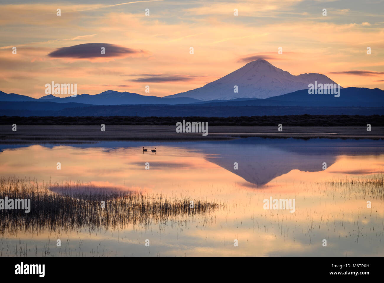 Canada Geese at Lower Klamath Lake with Mount Shasta in the distance; Lower Klamath National Wildlife Refuge, California. - Stock Image