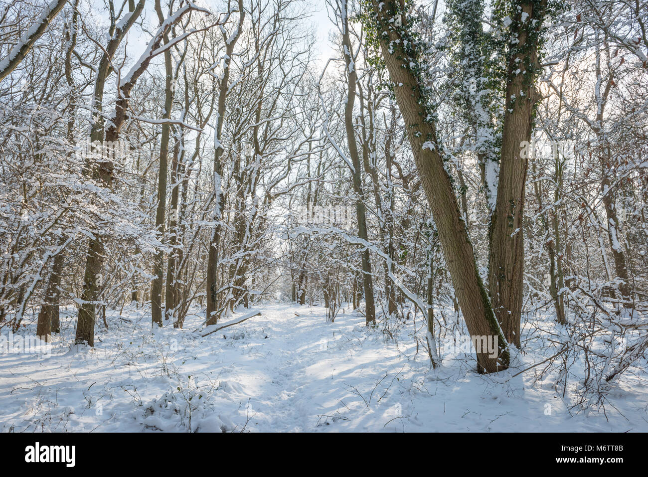 Winter brings snowfall to the rural Lincolnshire countryside near Bourne. Taken during the cold weather front called Stock Photo
