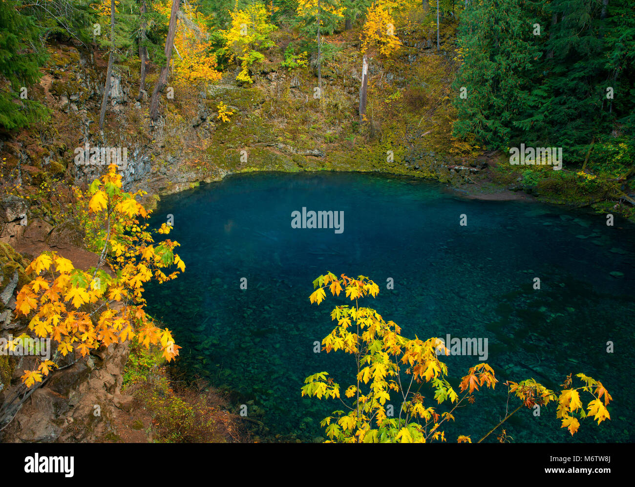 Tamolitch Falls, Blue Pool, McKenzie River National Wild and Scenic River, Willamette National Forest, Oregon - Stock Image