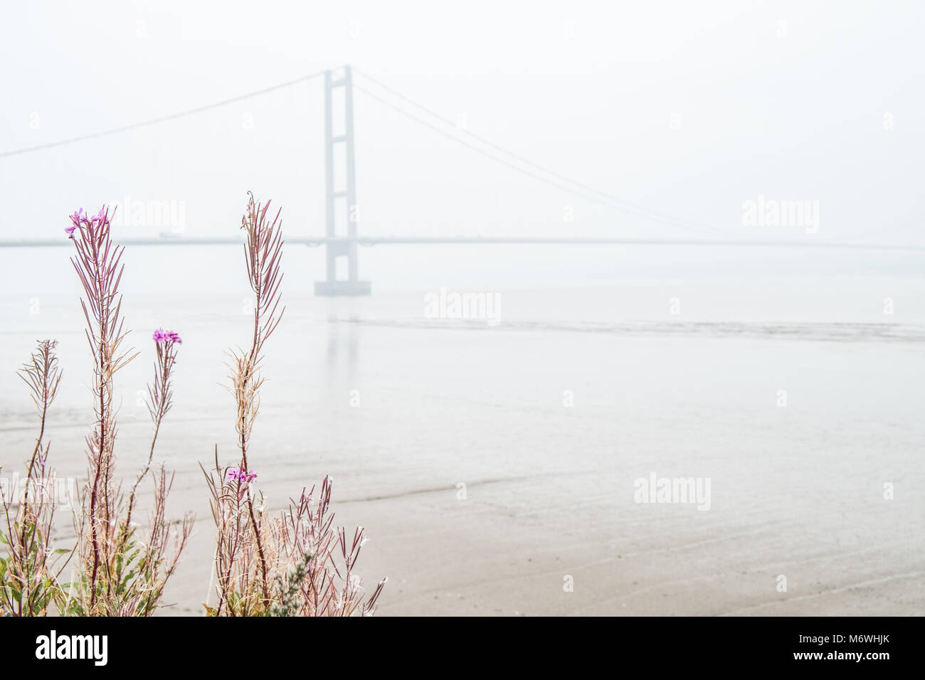 Humber bridge viewed from the south bank of the river at Barton upon Humber across flowering plants along shore, - Stock Image