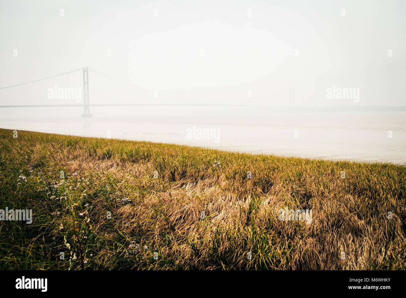 Humber bridge viewed from the south bank of the river at Barton upon Humber across a reed bed, atmospheric morning - Stock Image