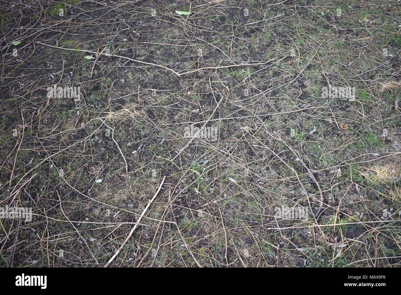 Randomly spread pile of twigs laying on the ground in the shade of a tree, useful as background Stock Photo