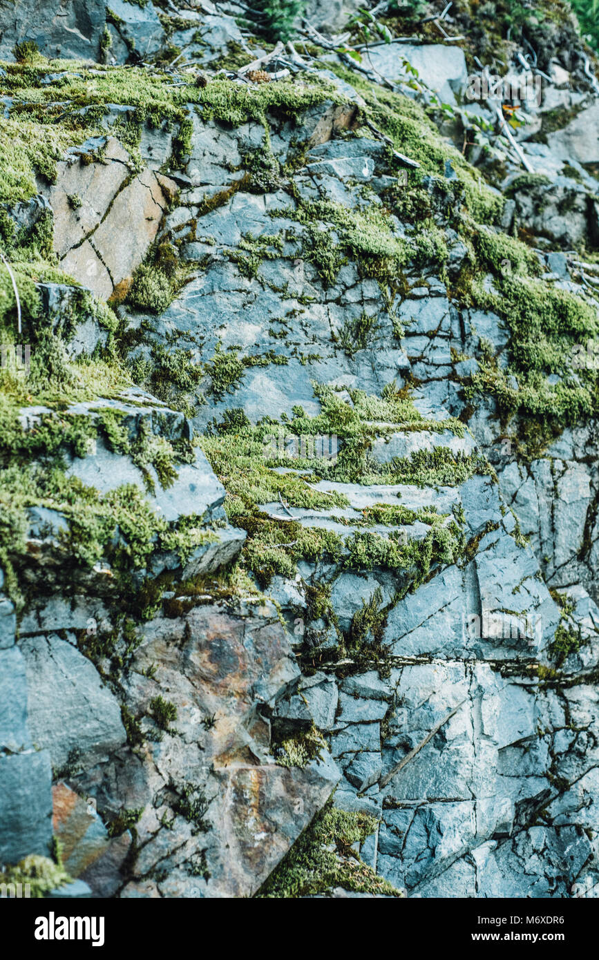 Moss growing on rocks in kenai fjords national park - Stock Image