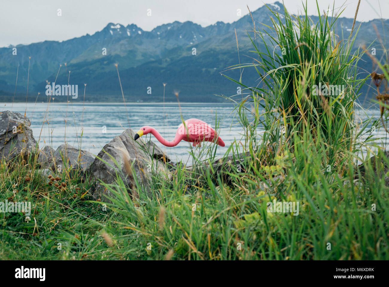 Flamingo in a Yard on a Lake in Alaska - Stock Image
