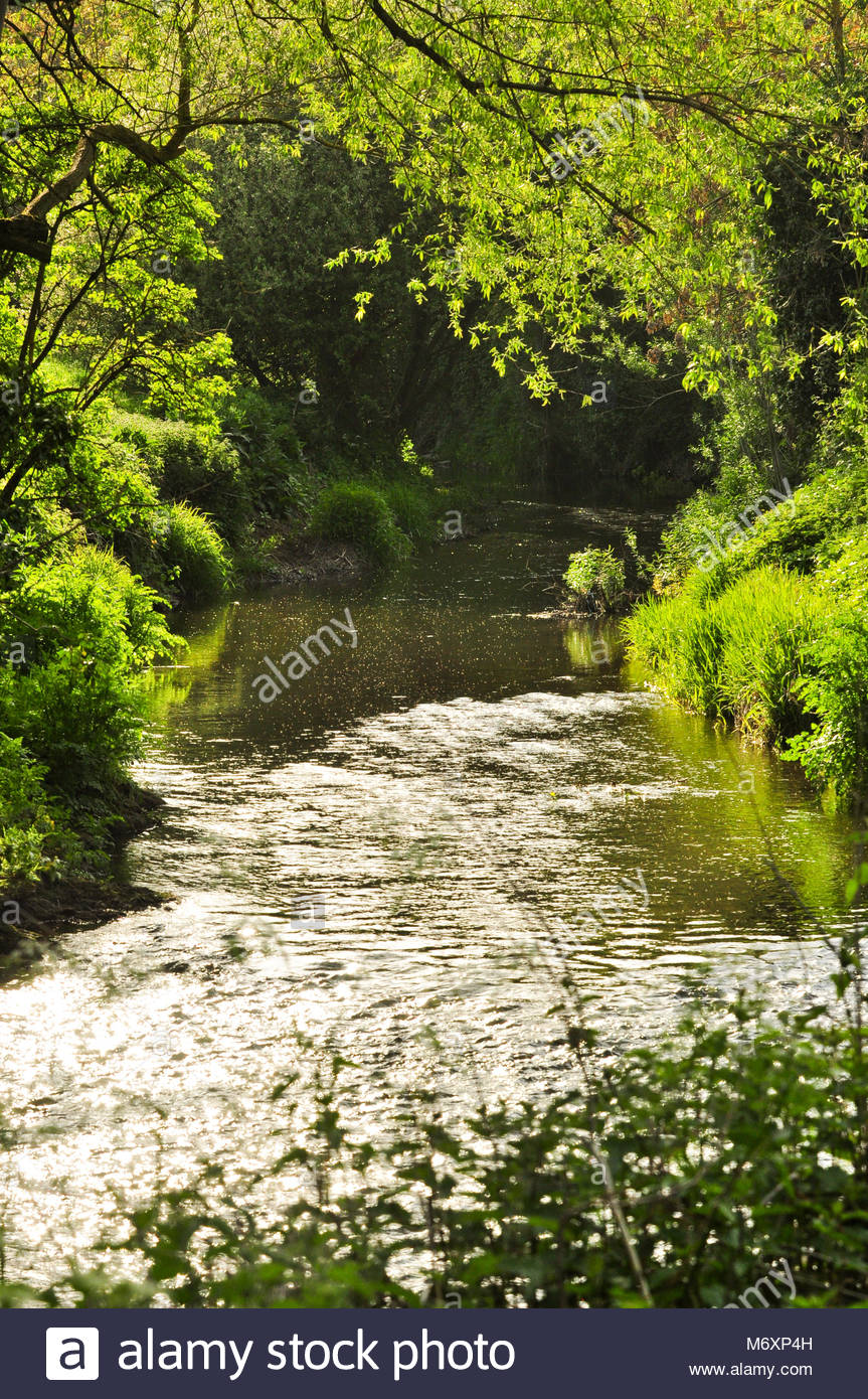 The Rea Brook winding its way through the Shropshire Countryside in Shrewsbury, England, UK - Stock Image