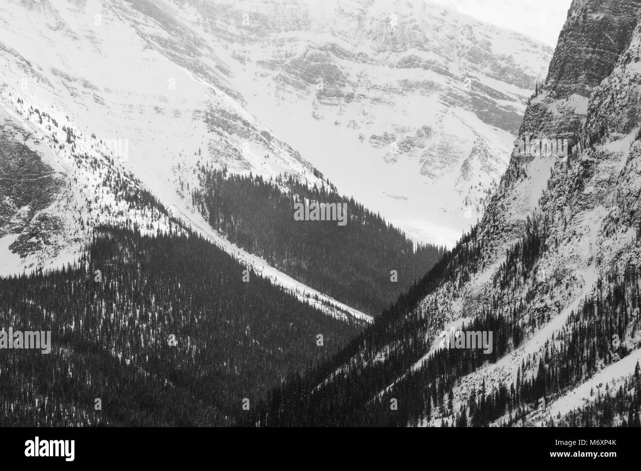 Black and white winter landscape of forested mountain slopes in the Canadian Rockies, Jasper National Park, Canada - Stock Image