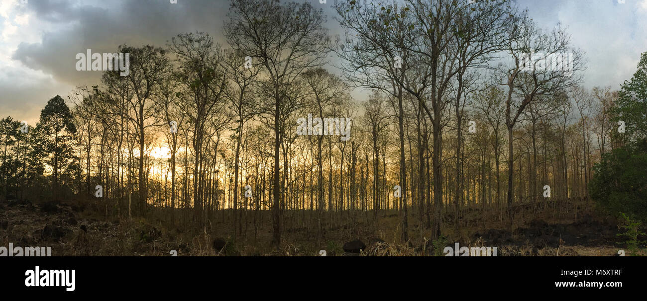 Tree forest at sunset in Dong Nai, Southern Vietnam. - Stock Image