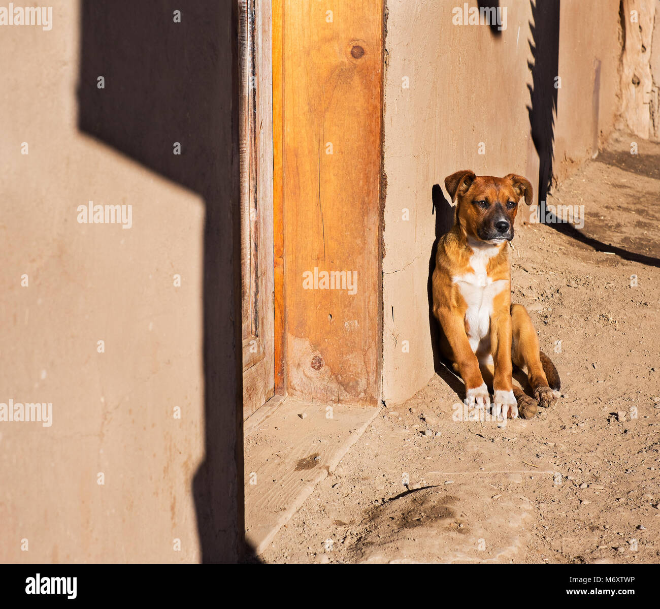 Puppy Outside Adobe Home - Stock Image