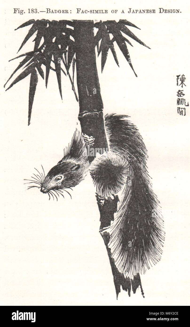 Badger: Fac-simile of a Japanese Design 1885 old antique vintage print picture - Stock Image