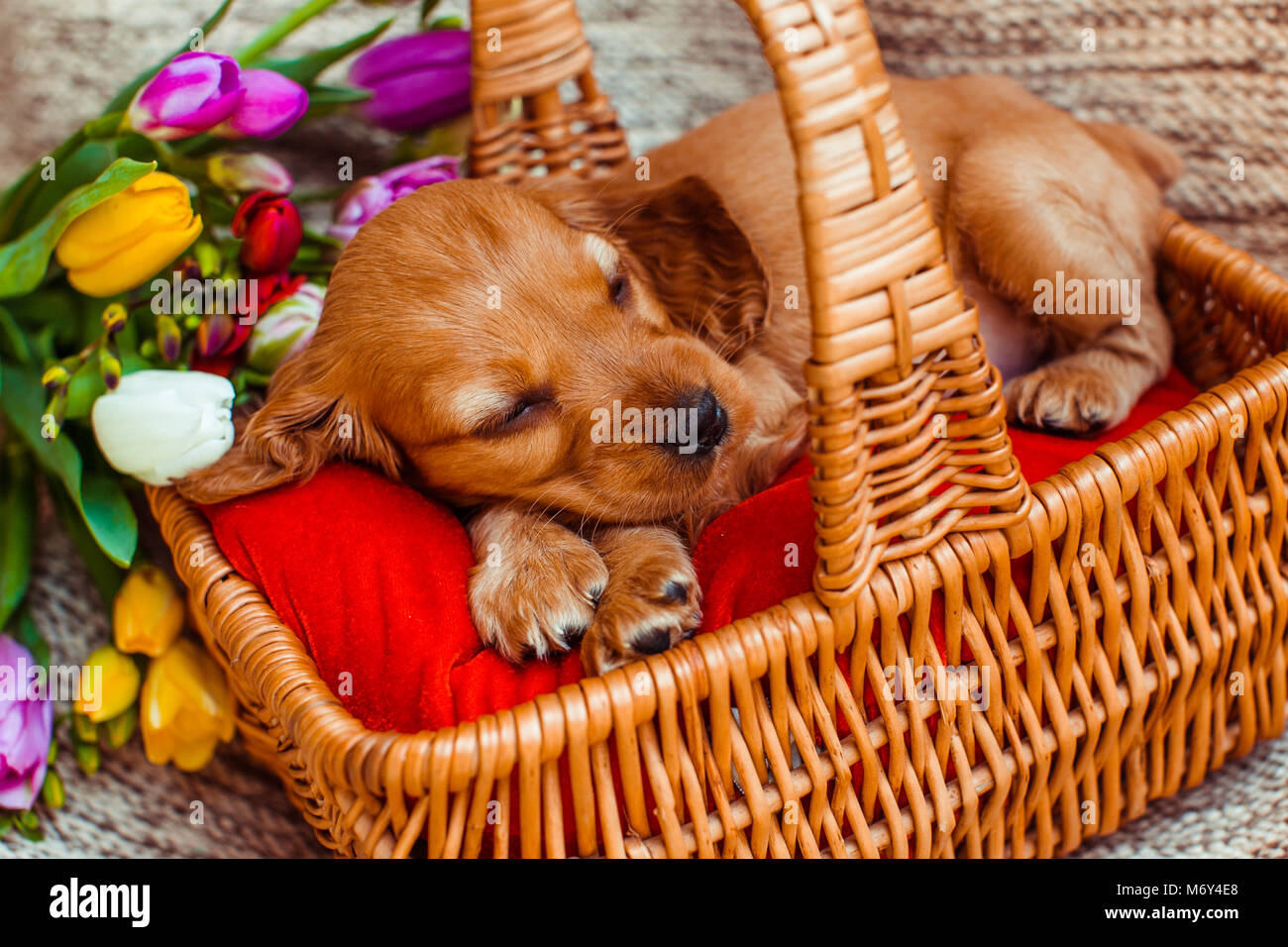 Dog With Quotes Stock Photos & Dog With Quotes Stock Images