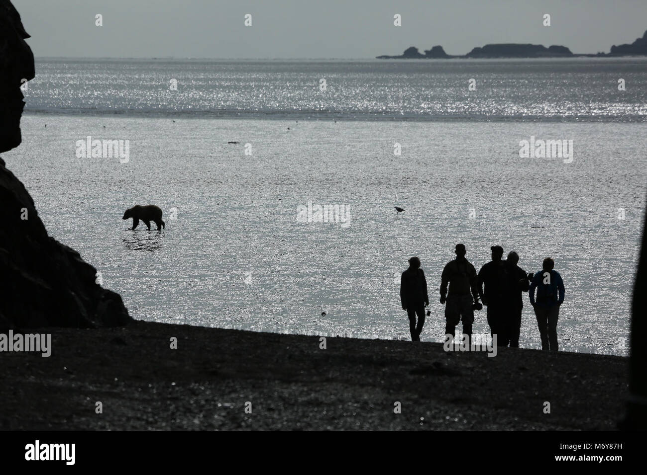Chinitna Bay Tidal Flats   . During low tide bears dig for clams in Chinitna Bay. These visitors are on the beach - Stock Image