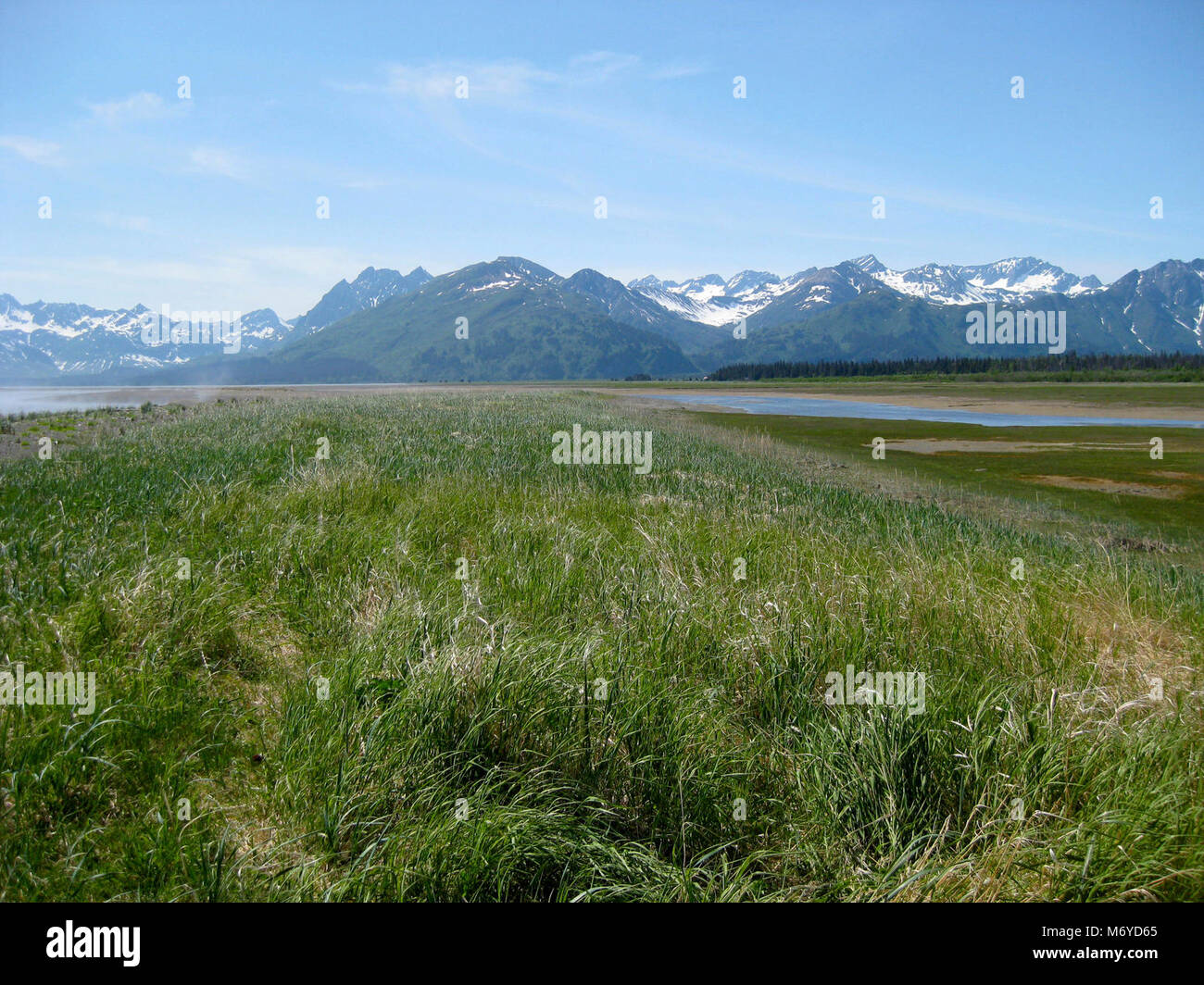 Western Bear Viewing Area   . The western bear viewing area offers open views of both the salt marsh and the beach. - Stock Image