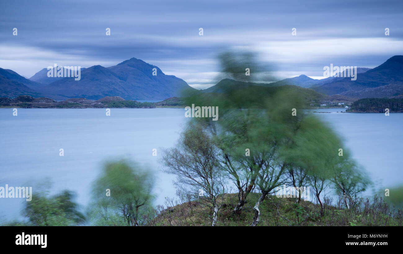 A tree swaying in the wind above Loch Shieldaig with the Torridon mountains beyond, Wester Ross, Scotland, UK - Stock Image
