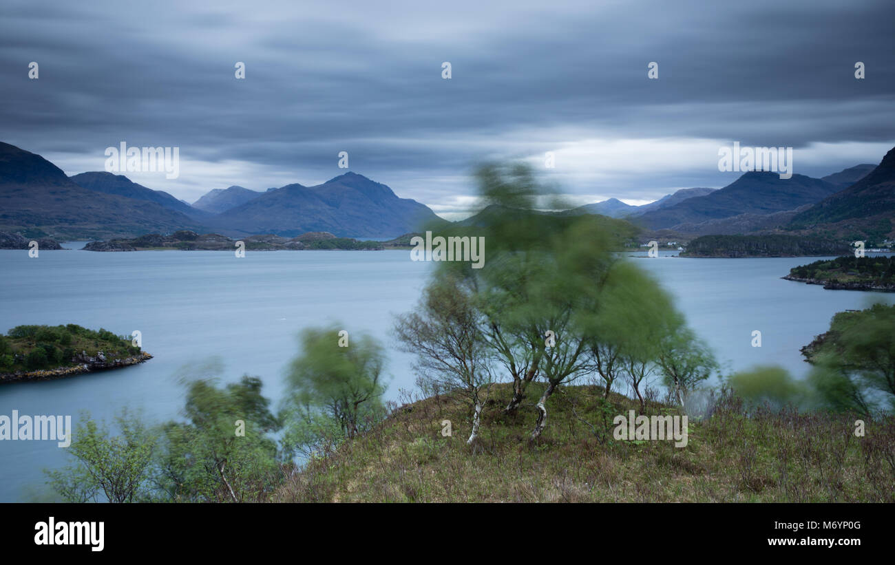 A tree in the wind above Loch Shieldaig with the Torridon mountains beyond, Wester Ross, Scotland, UK - Stock Image