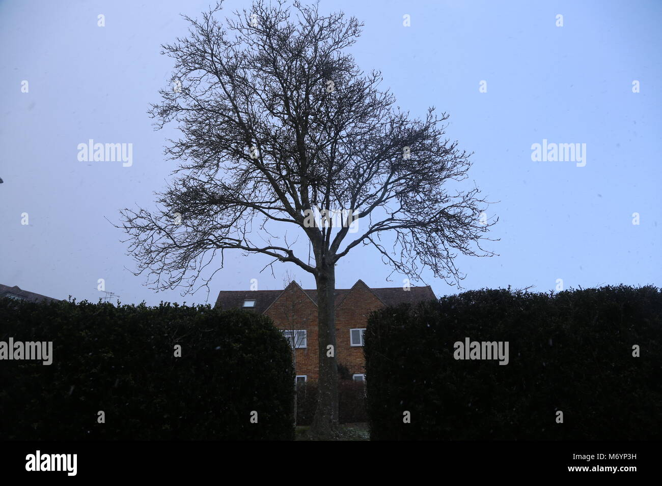 Snowy tree on doorstep - Stock Image