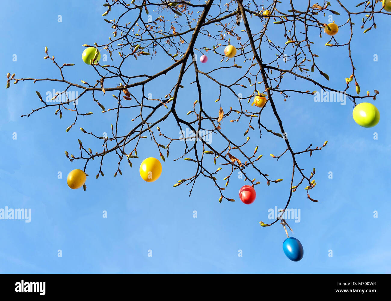 colorful easter eggs on a tree, view up to the sky - Stock Image