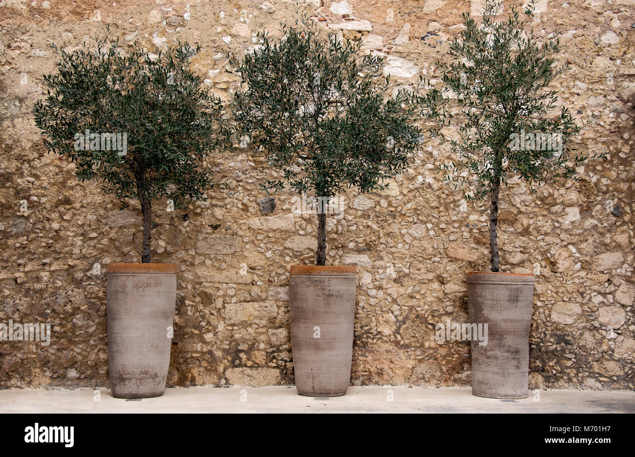 Olive Tree In Pot High Resolution Stock Photography And Images Alamy
