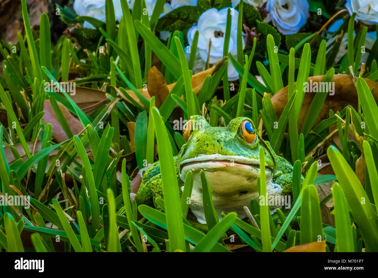 A frog hides in the grass in front of white flowers. - Stock Image