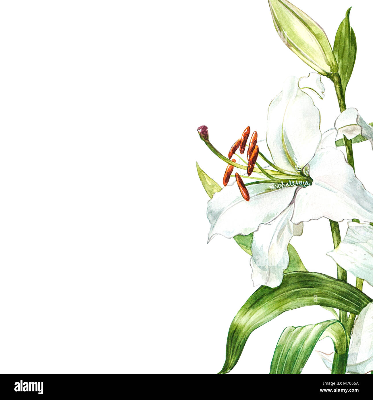 Hand drawn bouquet flowers lily stock photos hand drawn bouquet watercolor set of white lilies hand drawn botanical illustration of flowers isolated on a white izmirmasajfo