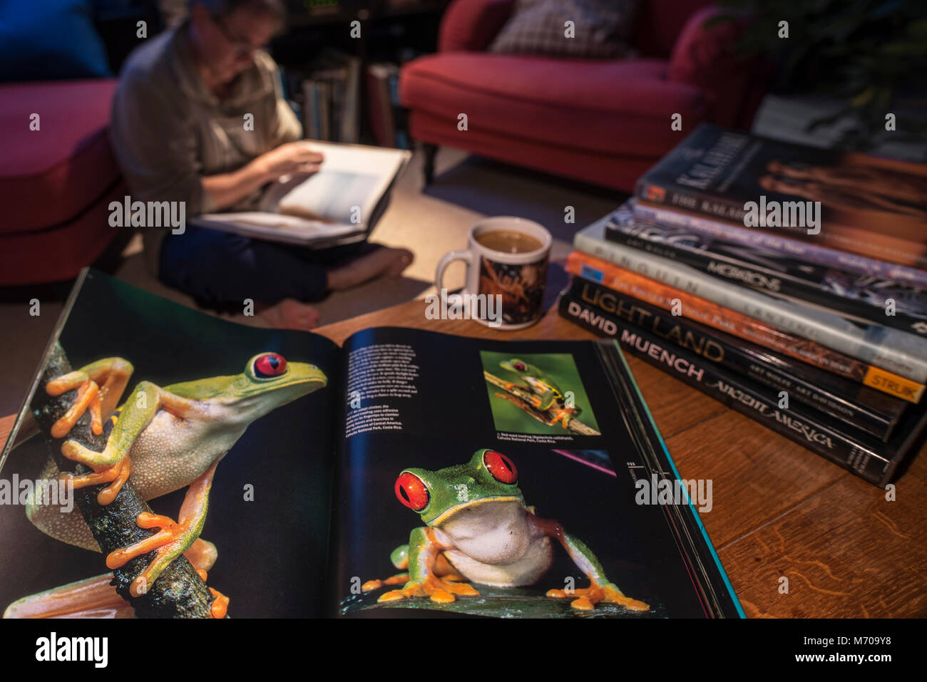 Open non-fiction hardcover coffee table book about wildlife photography showing animals in living room at home - Stock Image