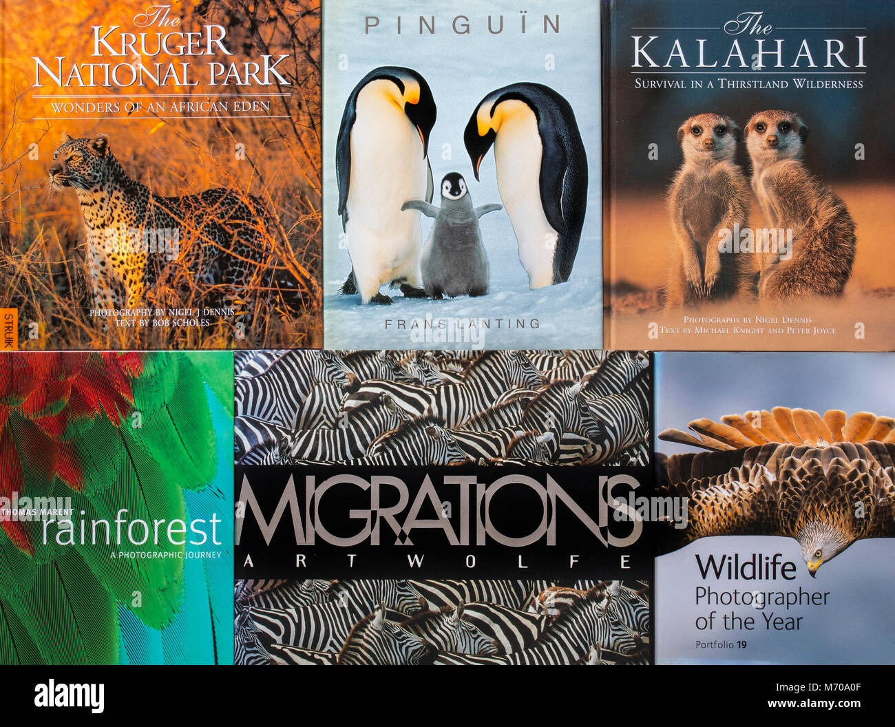 Collection of non-fiction hardcover coffee table books about wildlife photography showing animals - Stock Image