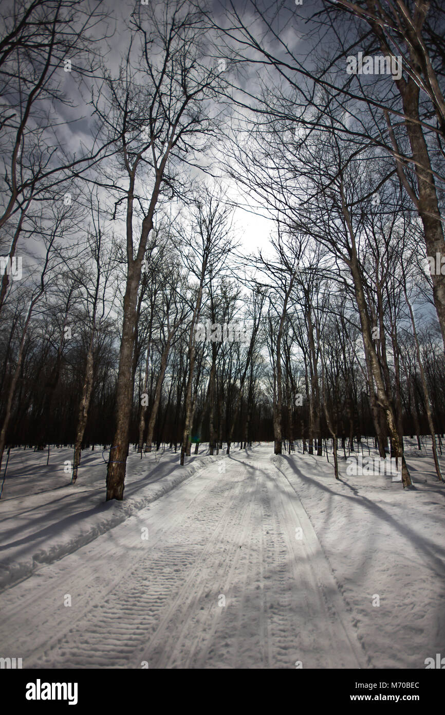 Snowmobile trail in a forest during winter. - Stock Image